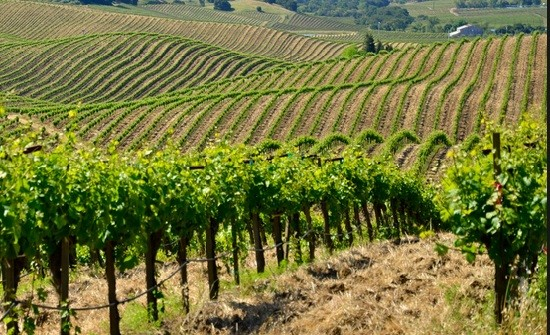 Un groupe chinois rachète un grand cru classé de Bordeaux