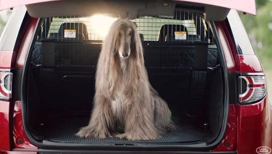 Des chiens dans un Land Rover.