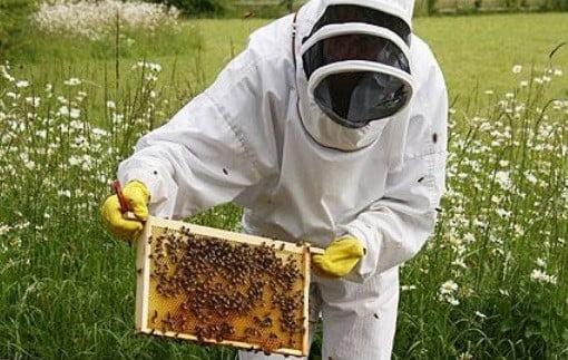 Un apiculteur.