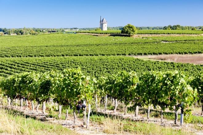 Illustration. Un vignoble près de Blaignan, en Gironde